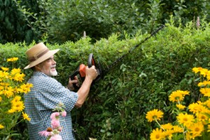 Heckenpflanzen_Garten