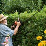 Schöne Hecken werden in jedem Garten gebraucht