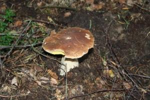 Pilze-selbst-zuechten