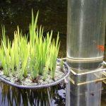 Gartenteiche im Winter – Teichbewohner sicher überwintern kriegen